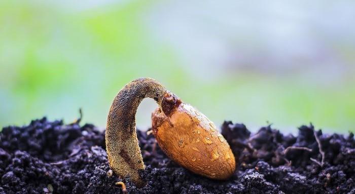 Des brevets sur les plantes et animaux normaux ?